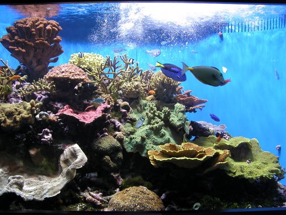 how to setup a fish tank saltwater