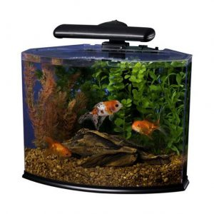 bow front aquarium sizes Tetra Crescent Kit 5 Gallon curved front LED
